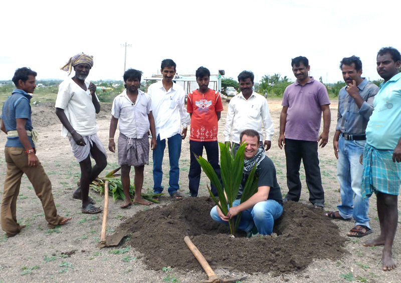 Planting a palm tree with artisans